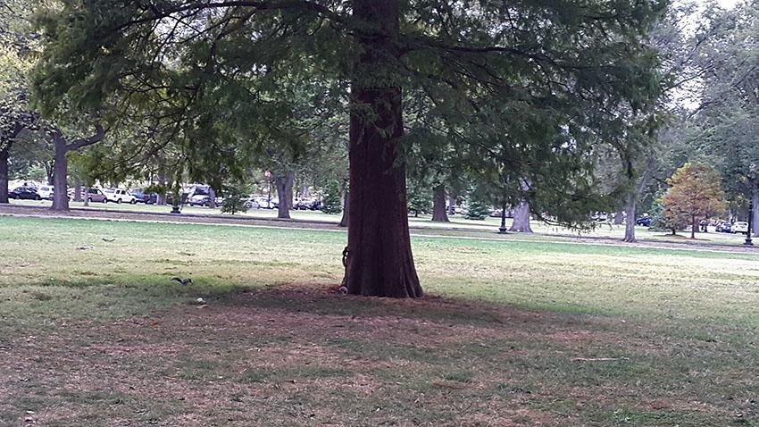 President park - Washington