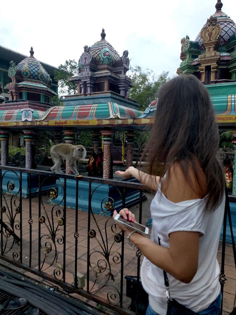 Feeding monkeys in front of the Batu Caves Kuala Lumpur.