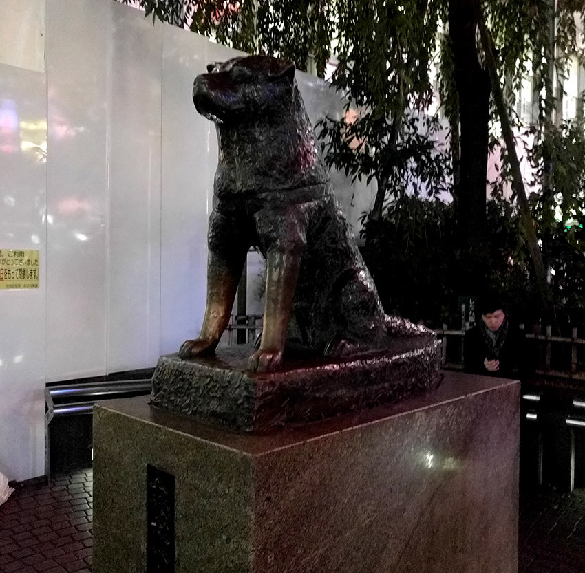 Hachicko statue in Shibuya Tokyo.